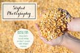 Styled Stock Photo: Fall BUNDLE - Corn (Comm Use OK)
