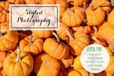 Styled Stock Photo: Fall BUNDLE - Pumpkins (Comm Use OK)
