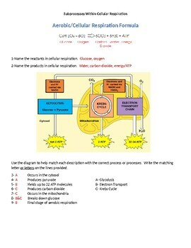 Sub-Processes Within Cellular Respiration Worksheet