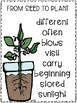 Success for All Reading Wings 2.2 From Seed to Plant & Plant a Tree Kit