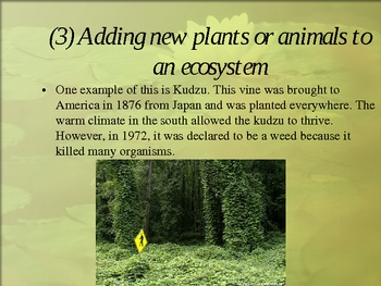 Succession: How Ecosystems Change Over Time