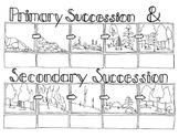 Succession Sketch Notes