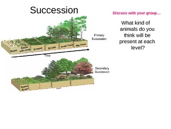 Succession and Limiting Factors PPT