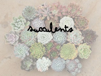 Succulents- - Horticulture, Agriculture Science, Plant Science