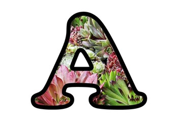 Succulents Bulletin Board Letters,  Numbers and Symbols, Plants Classroom Decor