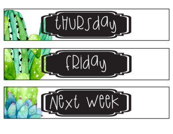 Succulents and Cactus ** Editable **Classroom Sterilite File Labels