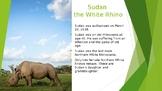 Sudan the White Rhino