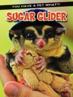 Sugar Glider