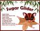 Sugar Glider - Australian Animal Song