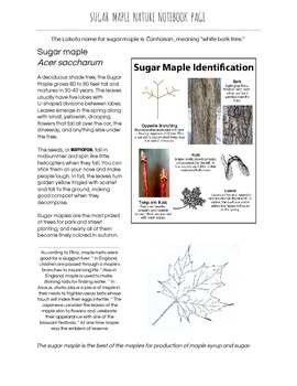 Sugar Maple Fact Sheet