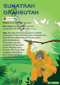 Sumatran Orangutan Endangered Animal Poster
