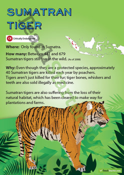 Sumatran Tiger Endangered Animal Poster