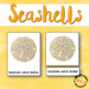 Summer Activities Types of Seashells 3 Part Cards for a Beach Theme