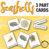 Summer Activities Types of Seashells 3 Part Cards for a Be