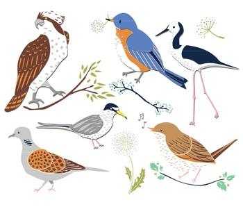 Summer Birds, Summer Clipart, Bird Clip Art, Summer Bird Clip Art