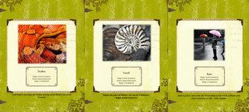 Summer Bundle-Nature Education Unit-Stage 2 (Magic Forest Academy)