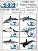 Summer Activities: Dolphin Facts Summer Science Activity Packet