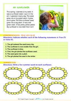 Summer - Sunflowers - Grade 2