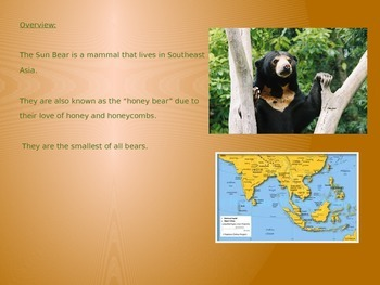 Sun Bear - Power Point - Information Facts Pictures