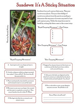 Sundews - CArnivorous Plants