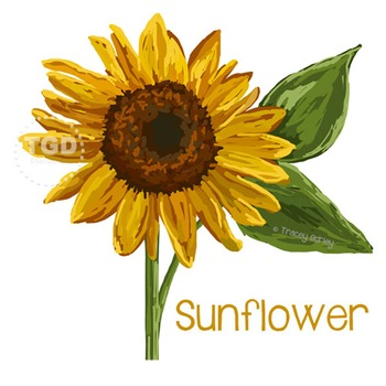 Sunflower Art - sunflower clip art, sunflower Printable Tr