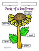 Sunflower Craft and More!