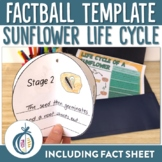 Sunflower Life Cycle Factball and Fact Sheet