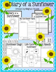 Sunflower Diagram Freebie