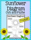 Sunflower Diagram Freebie