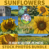 Sunflower Field - Sunflowers - Stock Photos BUNDLE - Flowe