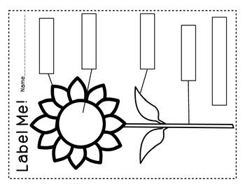 Sunflower Labeling Activity Fall Scott Foresman Flowers