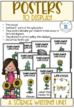 Sunflower Life Cycle Activities and Worksheets