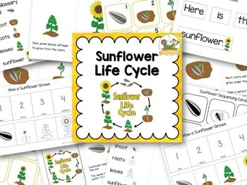 Sunflower Life Cycle