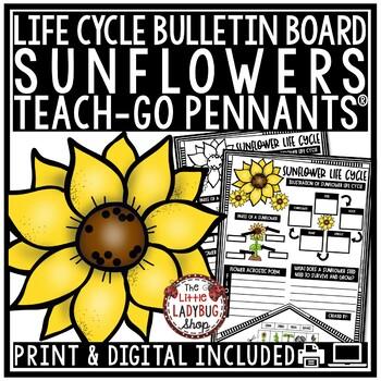 Sunflower Life Cycle Activity • Teach- Go Pennants™