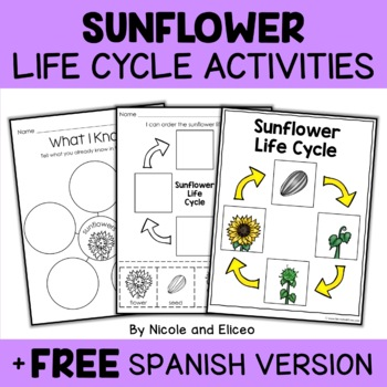 Vocabulary Activity - Sunflower Life Cycle