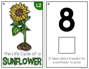 Sunflower Life Cycle Adapted Book { Level 1 and Level 2 } Life Cycle Sunflower