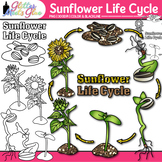 Sunflower Life Cycle Clip Art: Plant Group Graphics {Glitter Meets Glue}