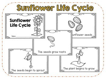 Sunflower Life Cycle Emergent Reader