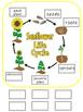 Sunflower Life Cycle File Folder Activity