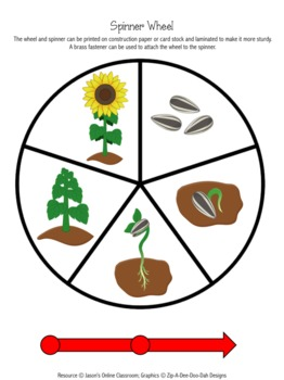 Sunflower Life Cycle Graphing Activity