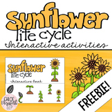 Sunflower Life Cycle Interactive Activities - FREEBIE!