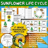 Sunflower Life Cycle | Student Reader | Science Activities and Centers