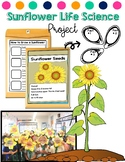 Sunflower Life Cycle, Needs of a Plant, and Parts of a Pla