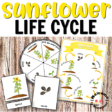 Sunflower Life Cycle Printables for Hands-on Activities