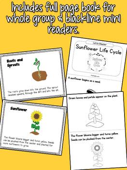 Sunflower Life Cycle Set