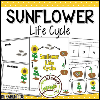 Sunflower Life Cycle Set