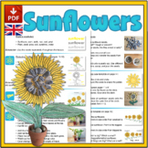 Sunflower Mini-lesson - UK Version (A4)