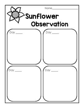 Sunflower Observation Recording Sheet