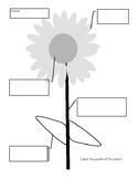 Sunflower Outline Activity Sheet