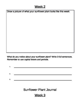 Sunflower Plant Journal--Six Weeks